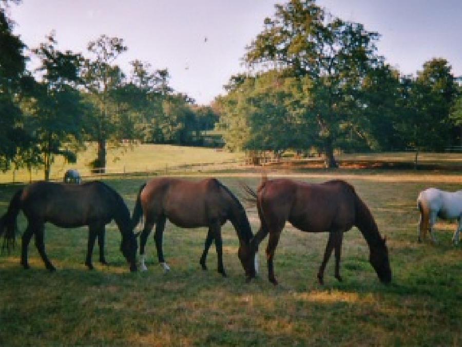 pension cheval à Cravencères Gers Pays d'Armagnac