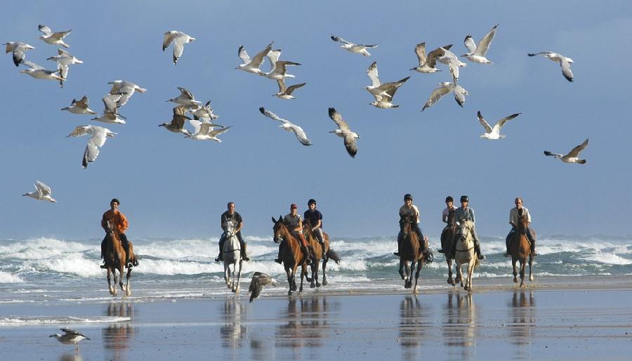 stage Initiation à l'équitation Landes