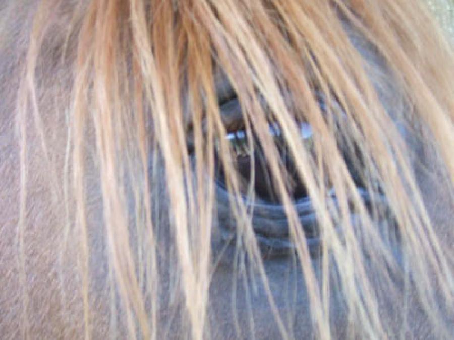 pension cheval à Saint-Genest-sur-Roselle Haute-Vienne Limousin