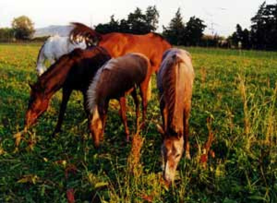 pension cheval à Tarascon Bouches-du-Rhône