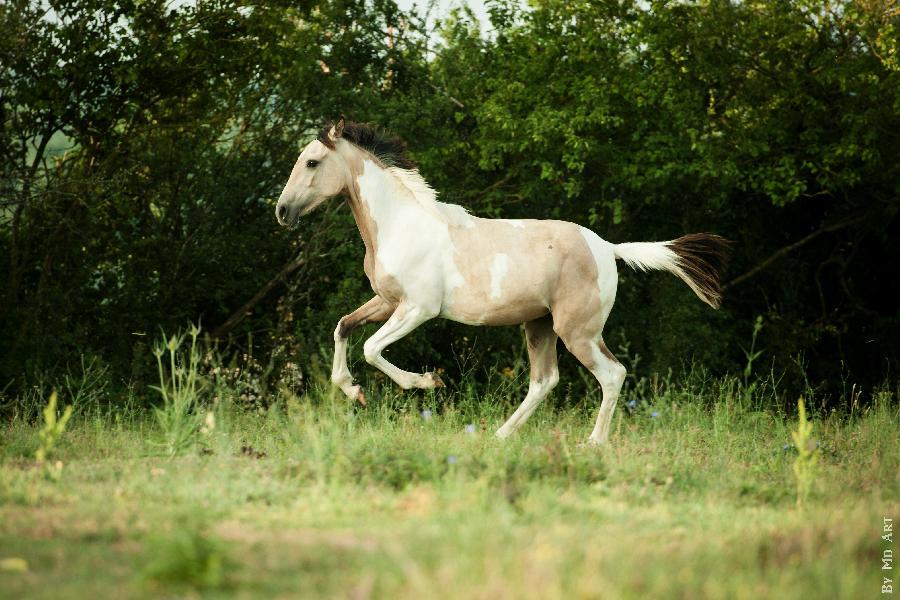 chevaux vendre sur terre equestre com annonces de professionnels catalogue de chevaux vendre. Black Bedroom Furniture Sets. Home Design Ideas