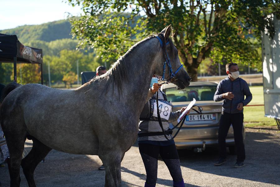 Etalon Arabe à Sigoulès Dordogne