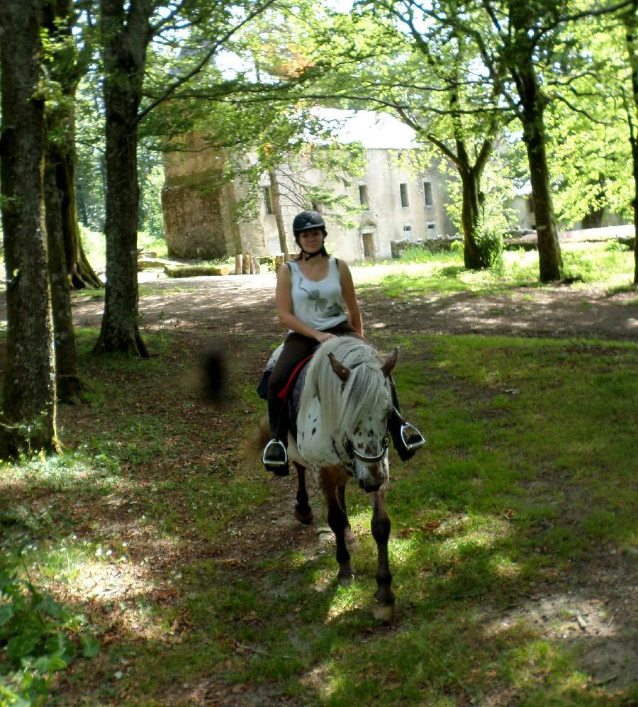 gite equestre La Salvetat-sur-Agout Hérault Ecurie du Haut-Languedoc