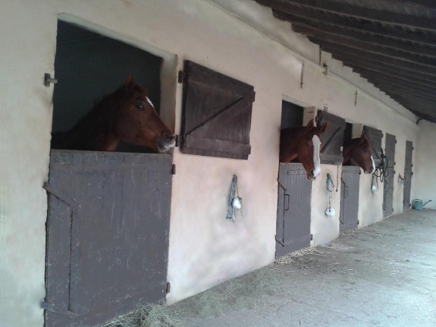 pension cheval à Méjannes-le-Clap Gard Languedoc