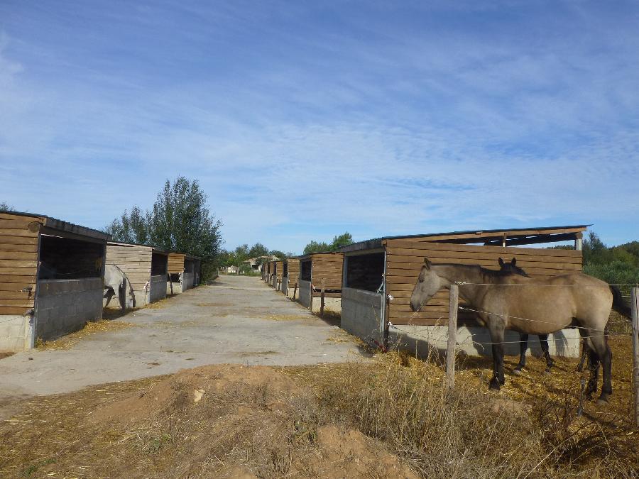 pension cheval à Mirepeisset Aude