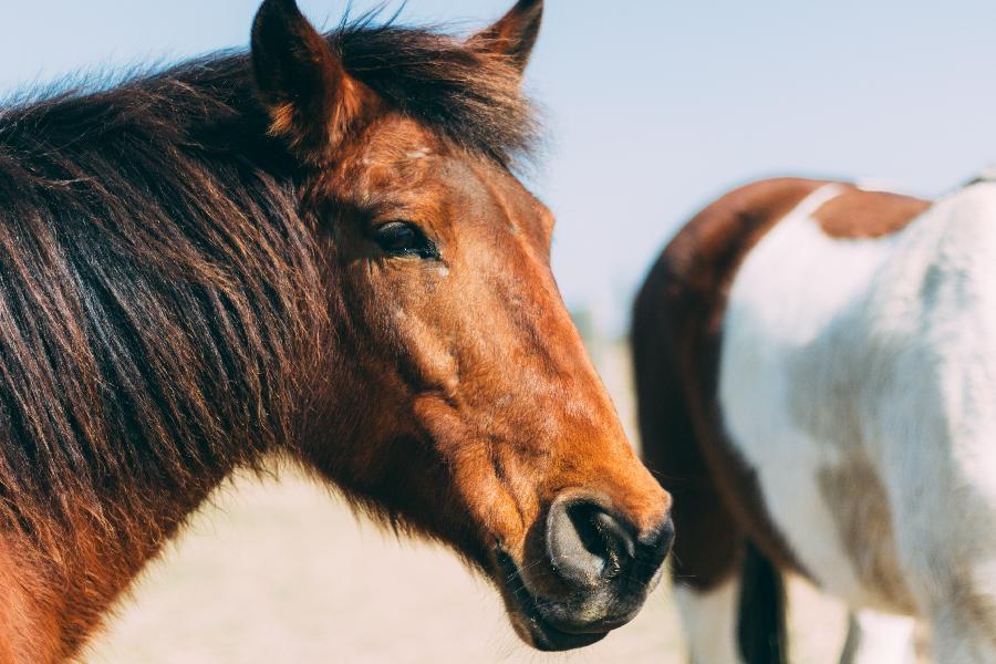 pension cheval à Forcalquier Alpes de Haute-Provence Provence