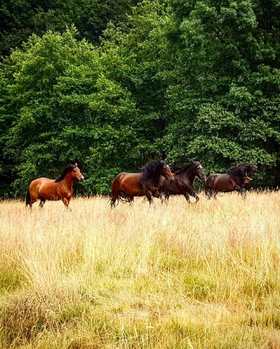 pension cheval à Saint-Clément Allier Montagne Bourbonnaise