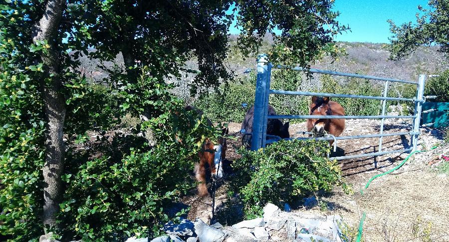 pension cheval à Blandas Gard Parc National des Cévennes