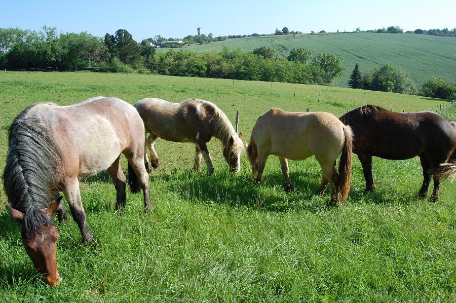 pension cheval à Marmande Lot-et-Garonne