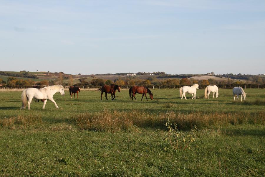 pension cheval à Mortagne sur Gironde Charente-Maritime Estuaire de la Gironde