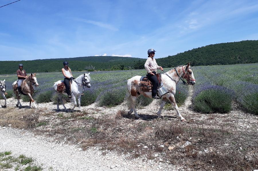 sejour Alpes de Haute-Provence Provence photo 6