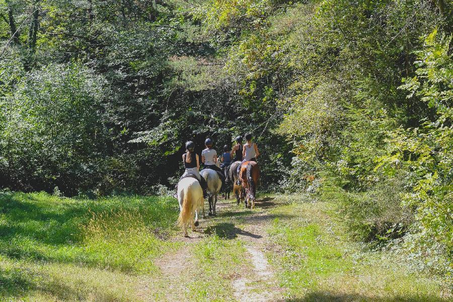 sejour Séjour à la ferme équestre Tarn
