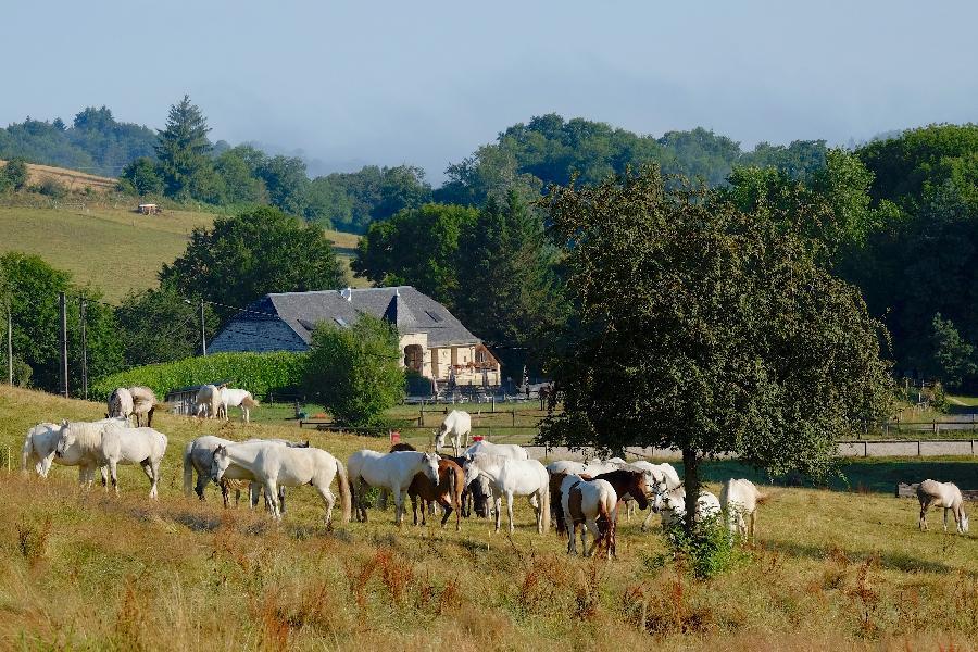sejour Séjour à la ferme équestre Corrèze