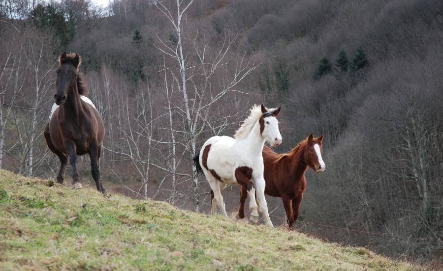rando Randonnée équestre Haute-Garonne