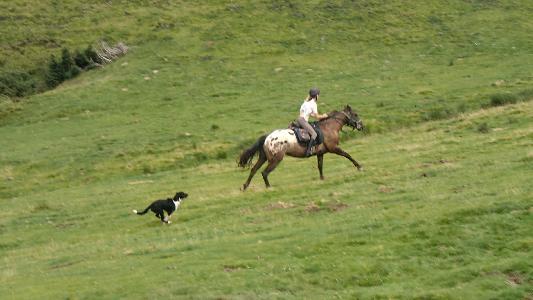 ... EQUIFUN - stage equitation ados dans le Tarn sur TERRE-EQUESTRE.COM