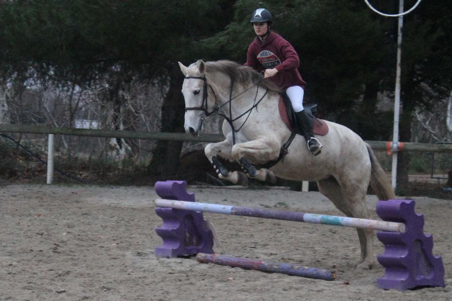 stage Equitation classique Aude