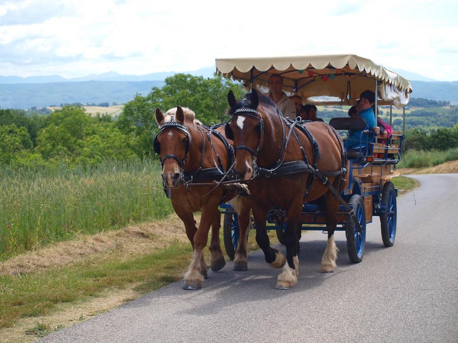 rando Attelage / promenade Alpes de Haute-Provence