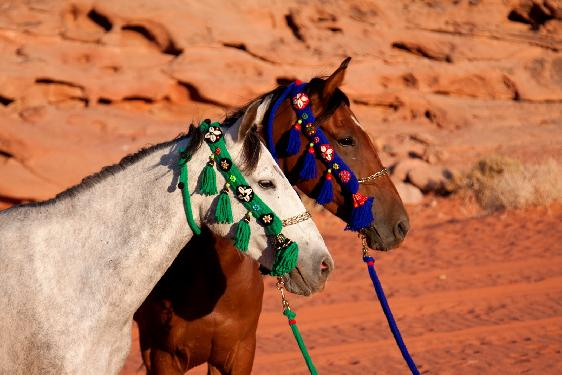 Photo voyage a cheval JORDANIE