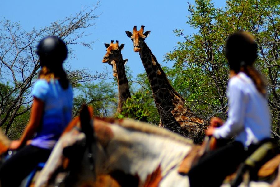 rando Randonnée équestre AFRIQUE DU SUD