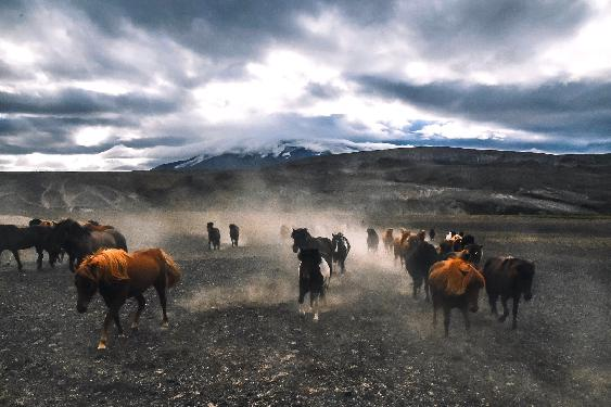 Photo voyage a cheval ISLANDE