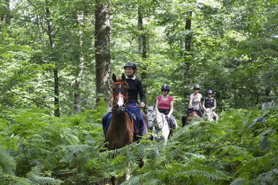Randonnee Equestre En Foret De Chantilly Sur Terre Equestre Com Balade D 1h30 A 3h En Foret D Halatte Et De Chantilly