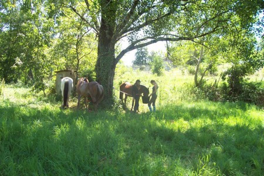 rando Balade à cheval Tarn