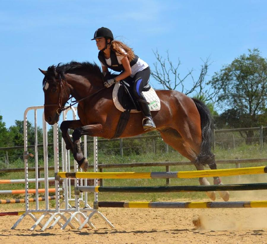 stage Equitation classique Gard