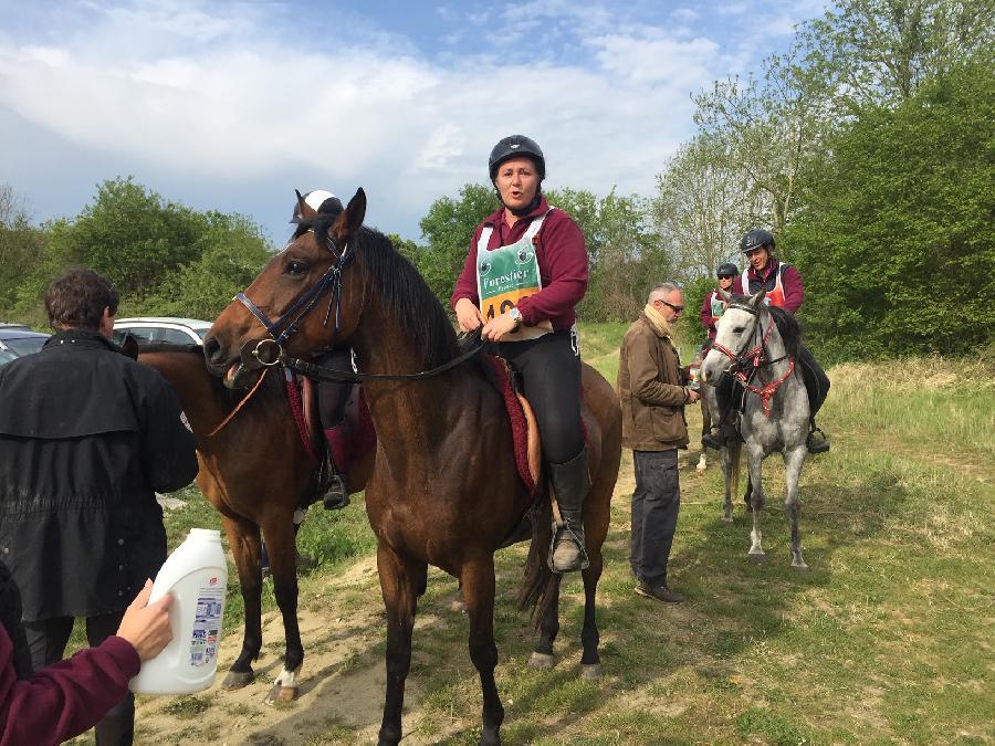 stage Endurance équestre Vosges