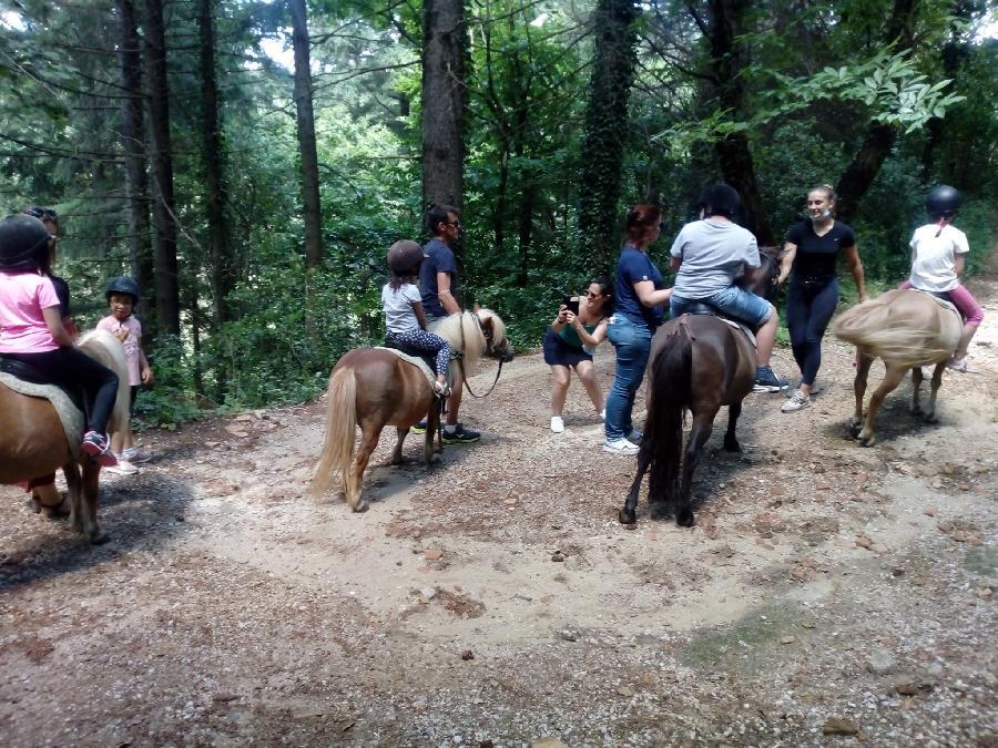 stage Initiation à l'équitation Gard
