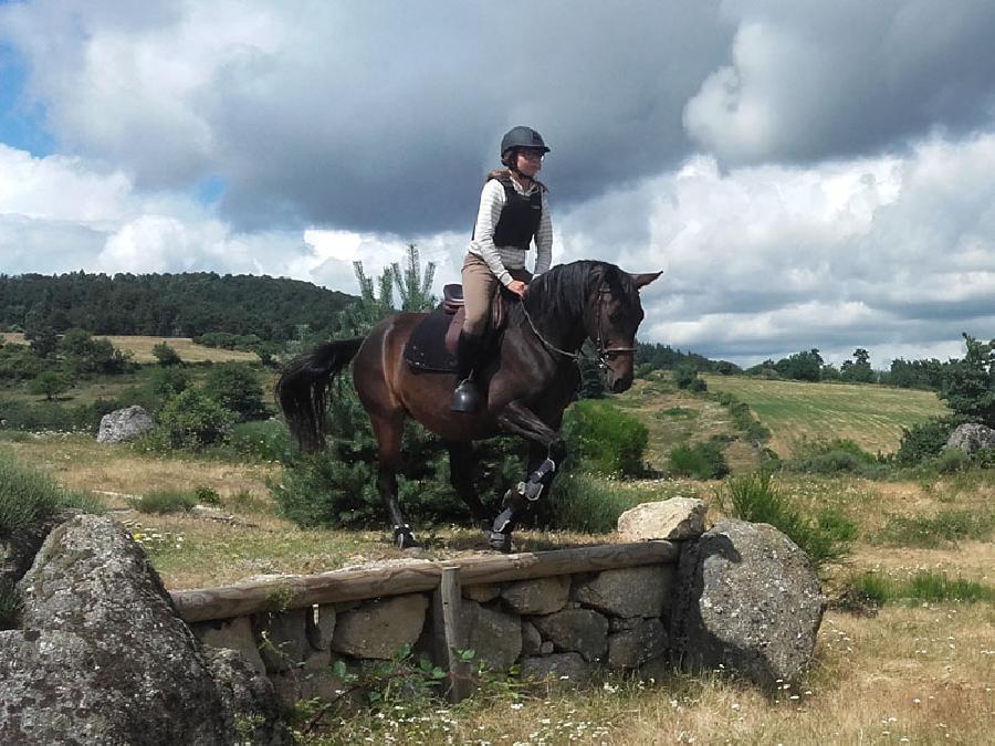 stage Equitation classique Lozère