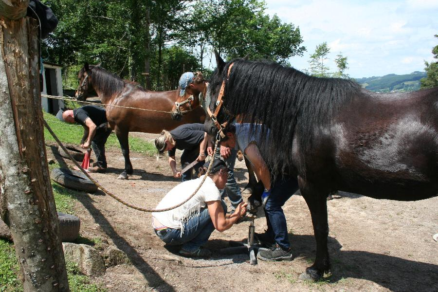 stage Equitation naturelle Allier