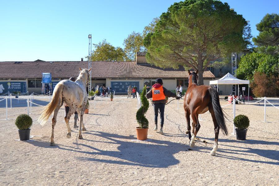 stage Endurance équestre Gard