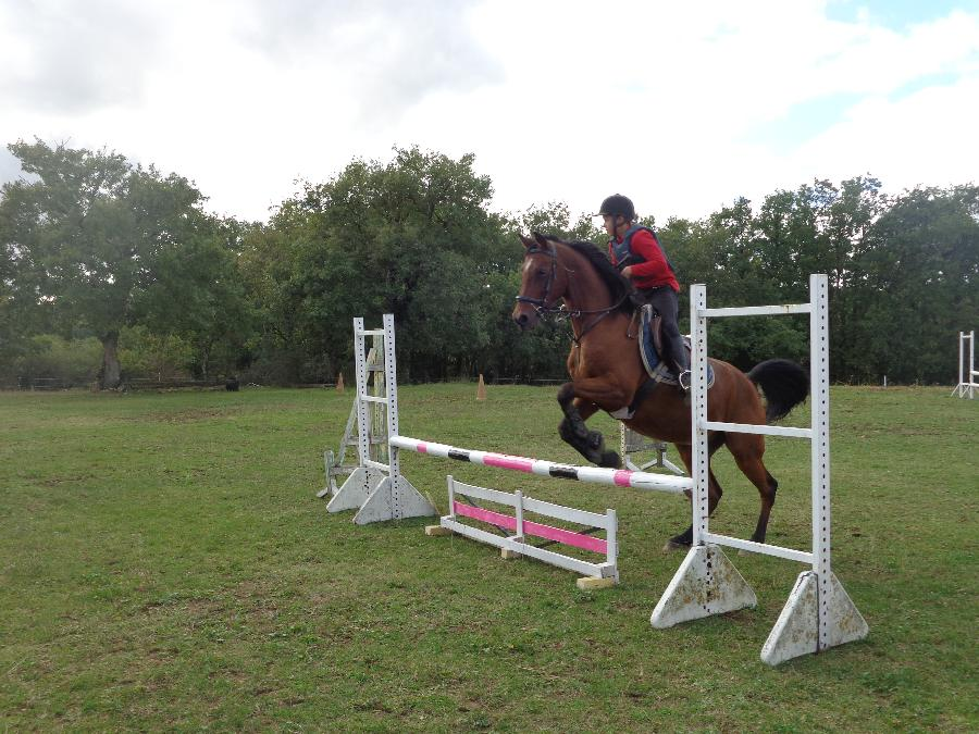 stage Equitation classique Tarn